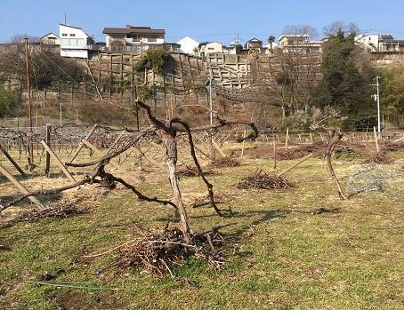 建設予定地の畑の解体開始