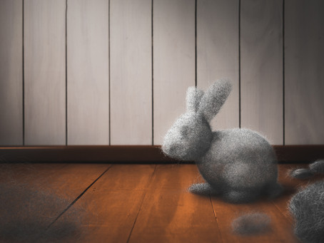 Dust Bunnies in our Heart