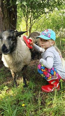 lammasjatyttö.jpg