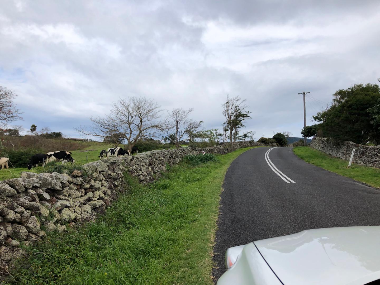 Cows & Stone Walls