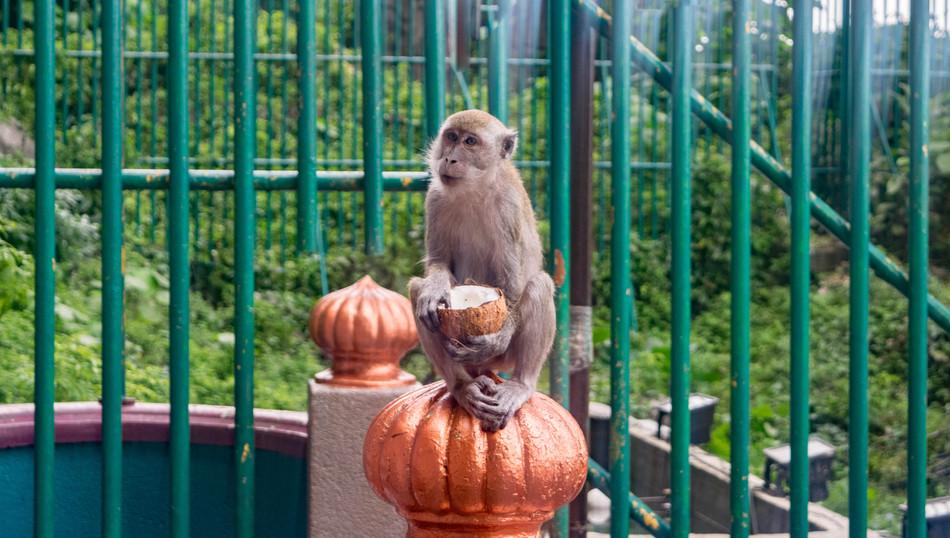 Kuala Lumpur- A Monkey-Jacked Story