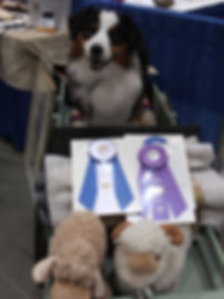 Wyatt in wagon at Eukanuba.jpg