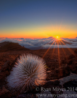 Silversword & Sunrise