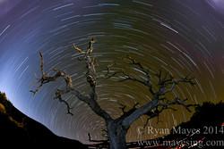 Mauna Kea Star Trails