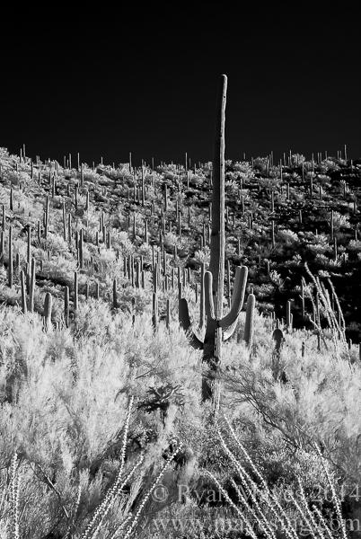 Saguaro IR