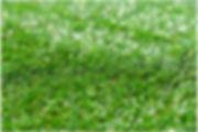 artificial lawn company sydney