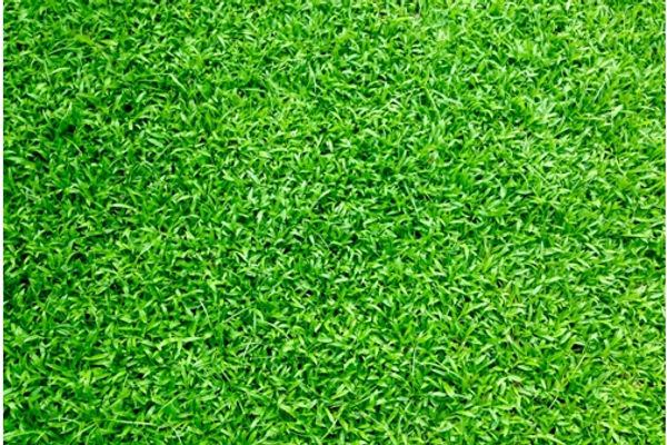 Sydney Synthetic Grass.jpg