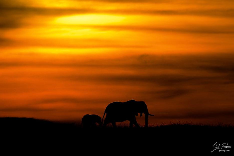 Ombres d'éléphants.jpg