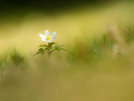 Couché dans l'herbe