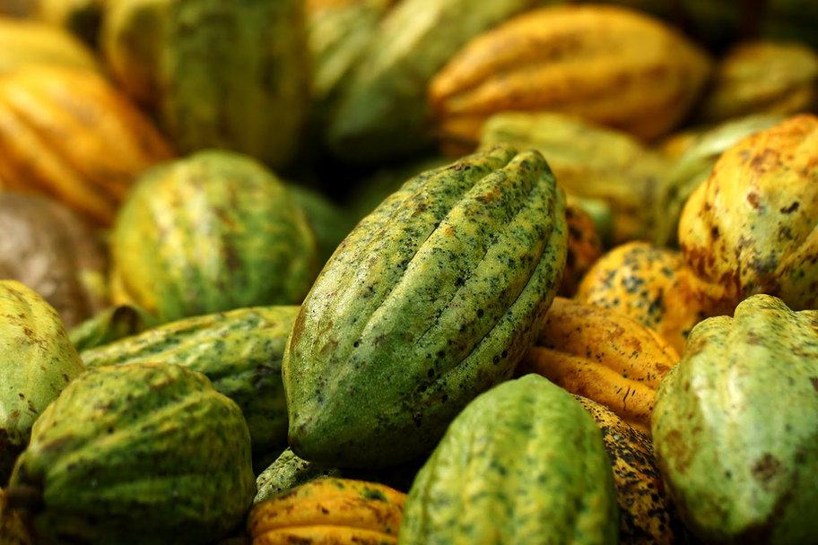 cocoa-pods.jpg