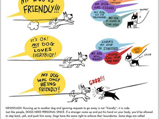 Spacial Awareness: Not all dogs like being sniffed by other dogs.
