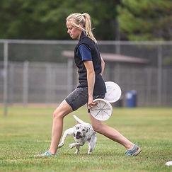 Frisbe disc dog doing tricks
