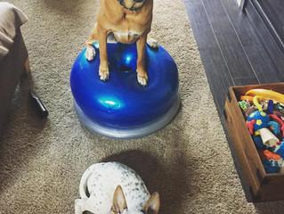 Indoor Winter Activities for Your Pooch!