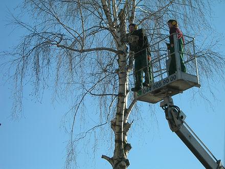 Urs Weyermann Gartenpflege. Bäume schneiden.