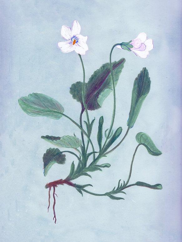violette D.jpg