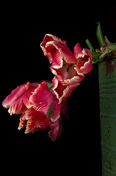 flora_20.jpg
