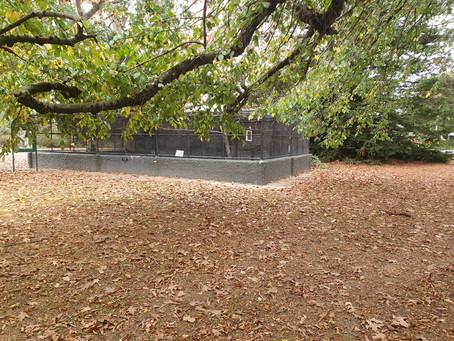 Temuka aviary birds need a warmer home