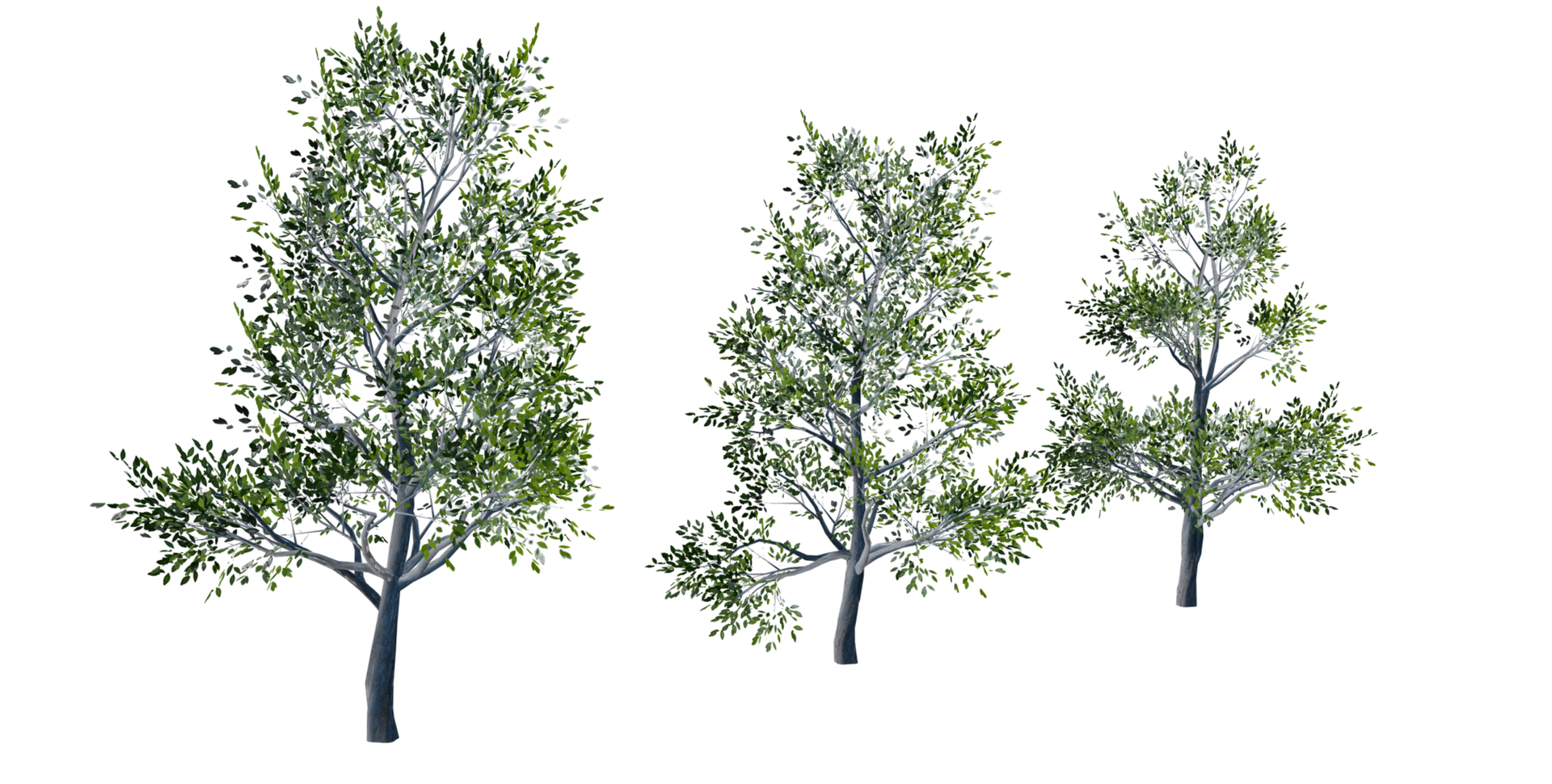 Trees Details-02.png