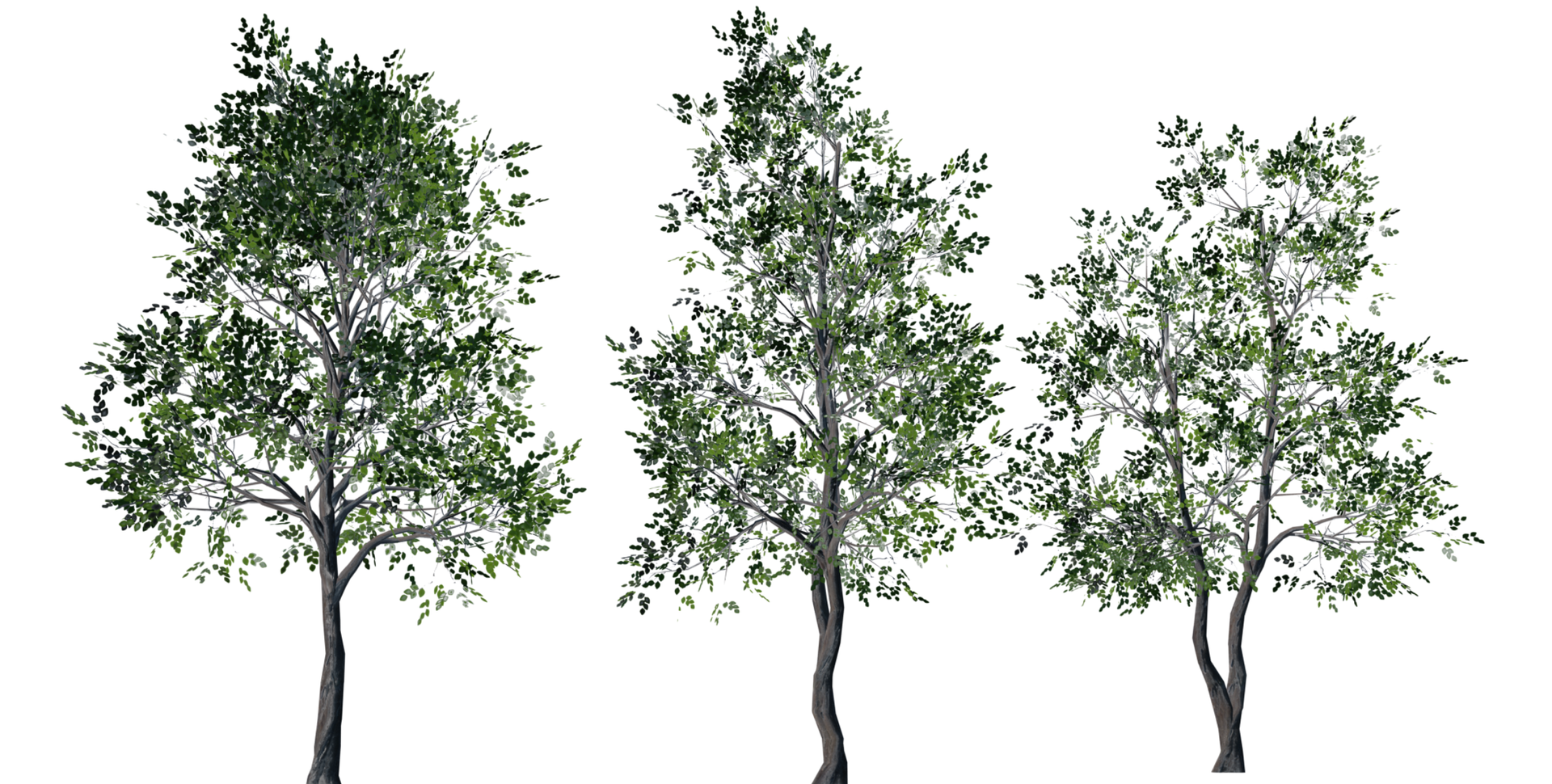 Trees Details-11.png