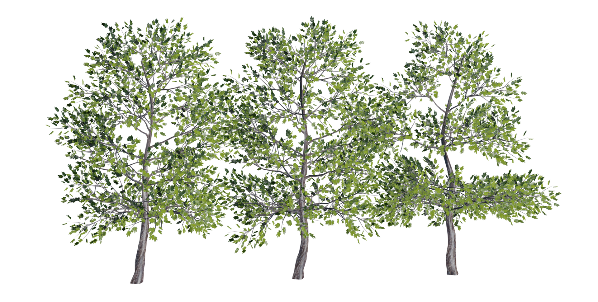 Trees Details-16.png