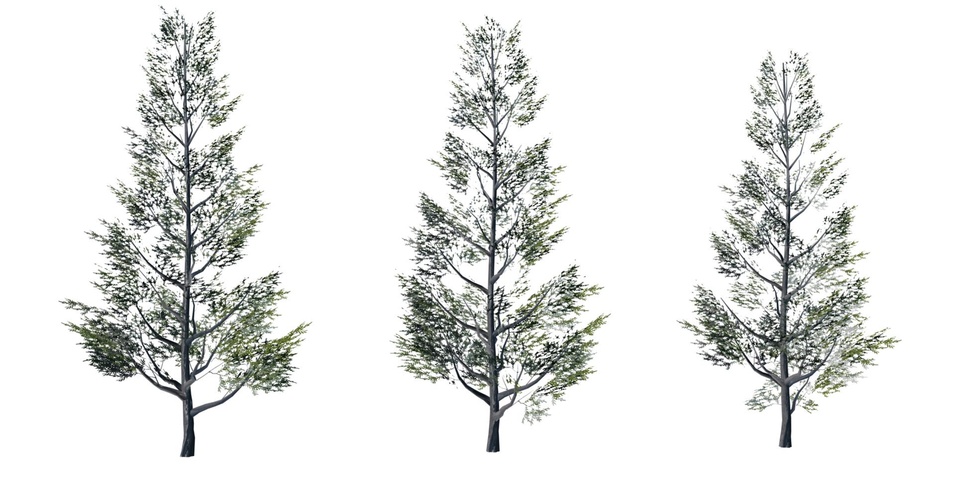 Trees Details-19.png