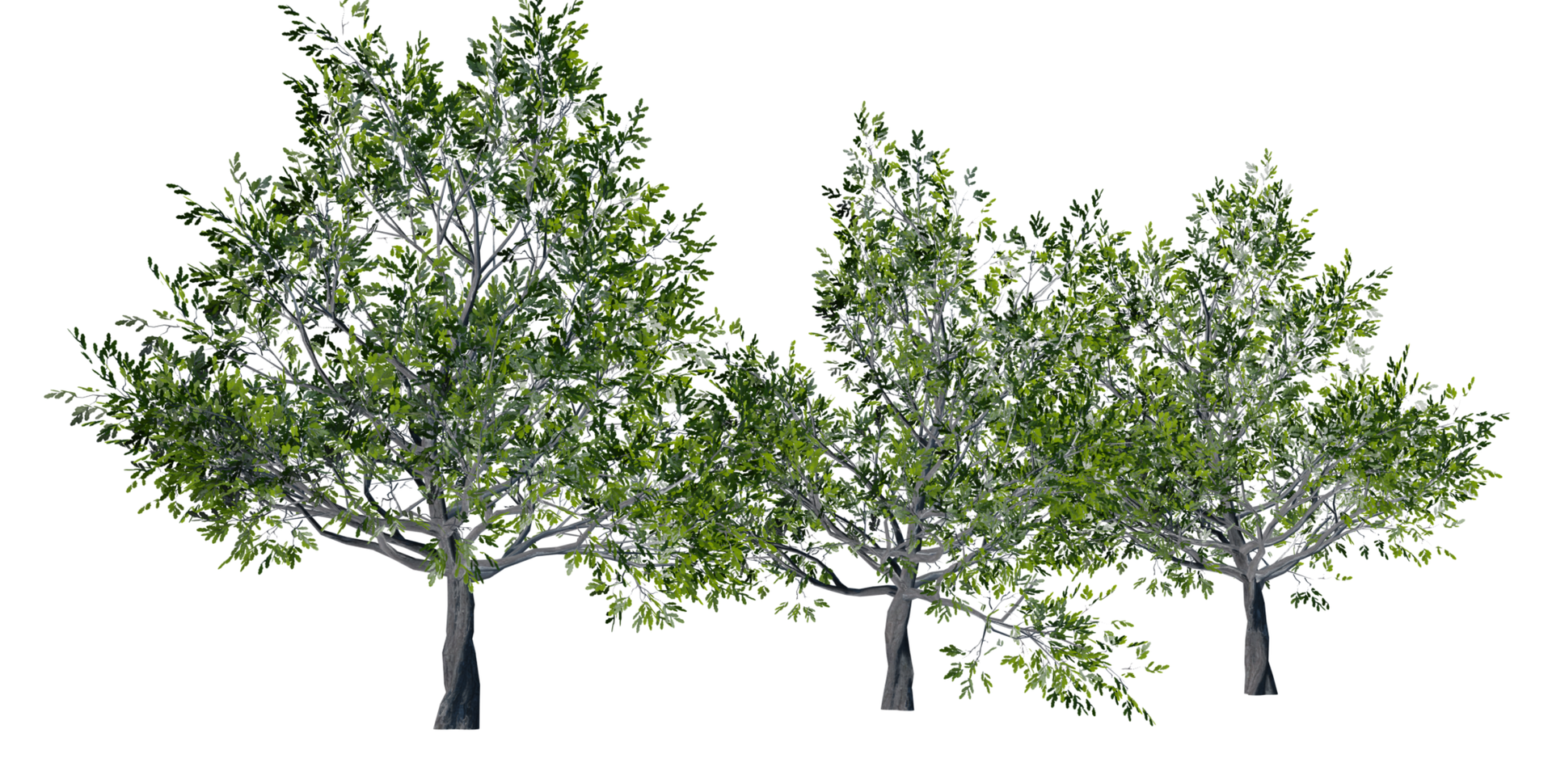 Trees Details-17.png