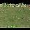 Thumbnail: Grass4Game 2.0