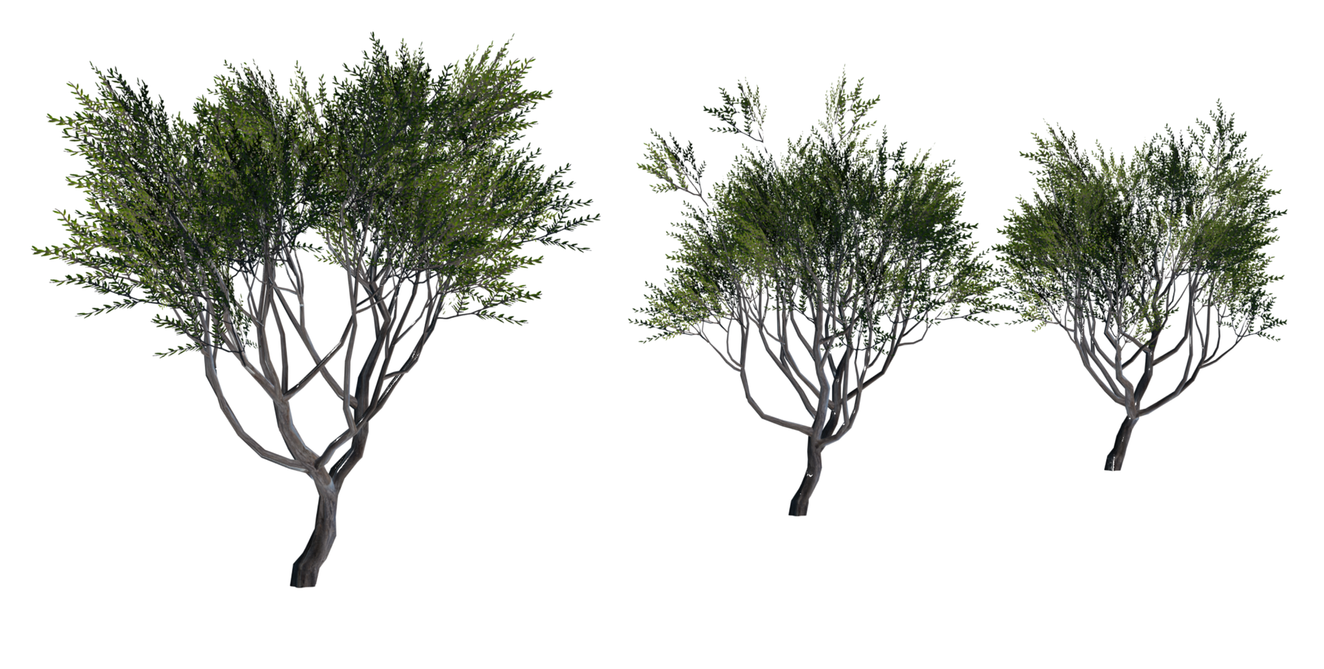 Trees Details-01.png