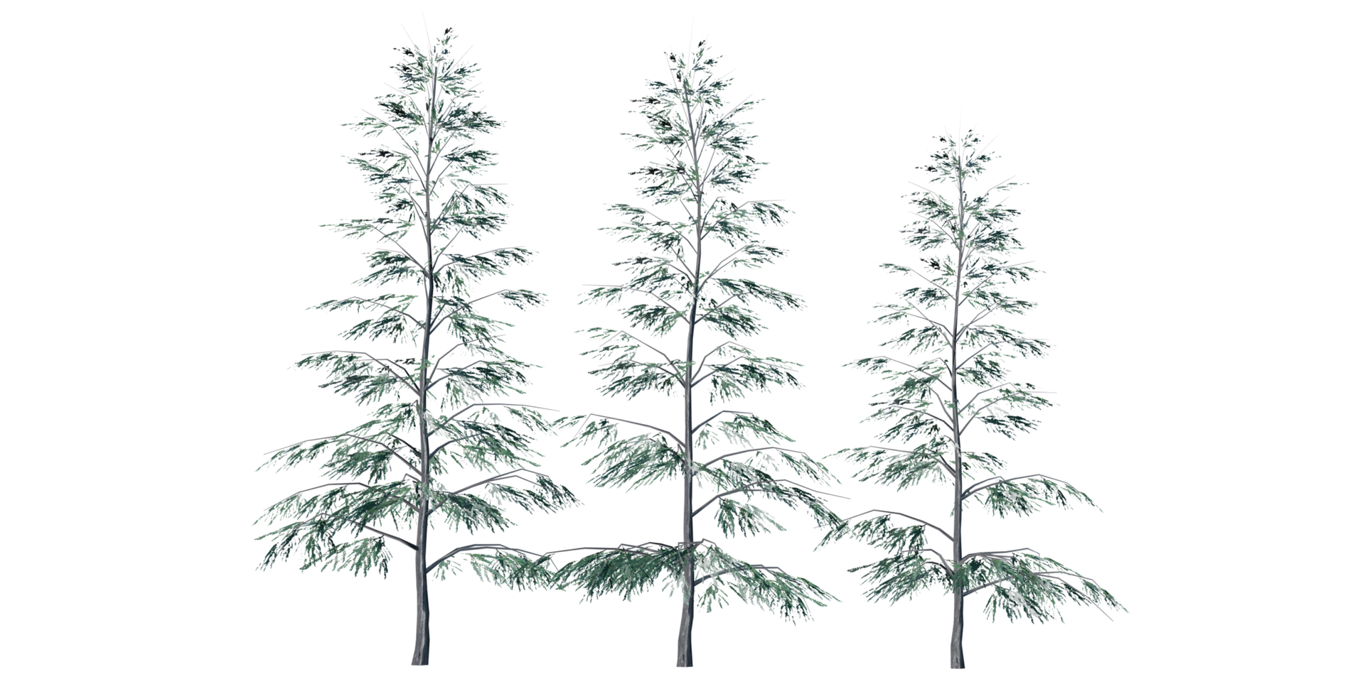 Trees Details-12.png