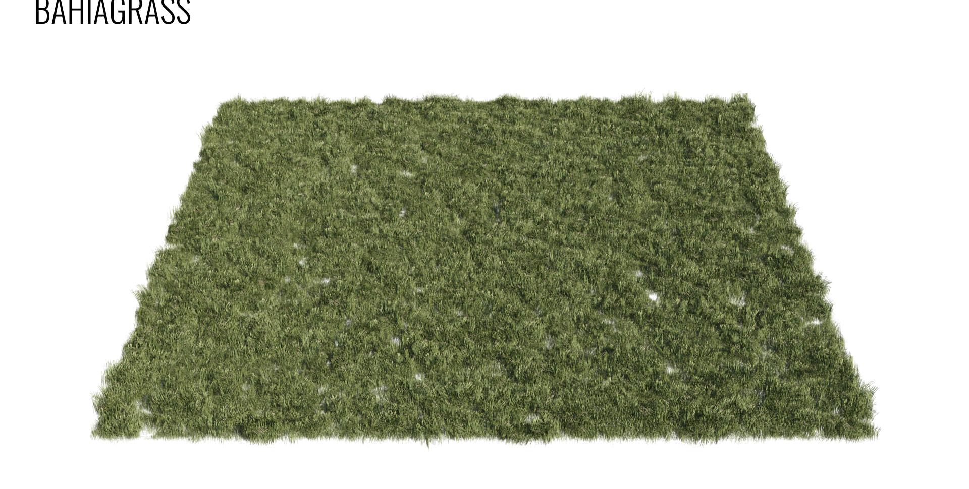 Bahiagrass.jpg