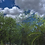 Thumbnail: Trees Pack FBX, OBJ