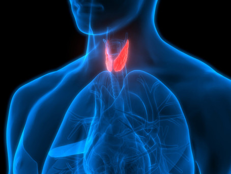 Thyroid hormones explained