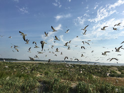 Seabird Colony Registry and Atlas