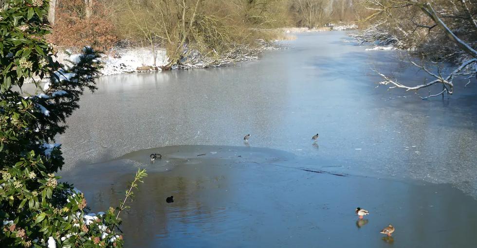 """Winter 2021. de Nieuwe Dordtse Biesbosch. """"de Elzen"""""""