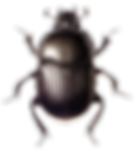 Beetle-PNG.png