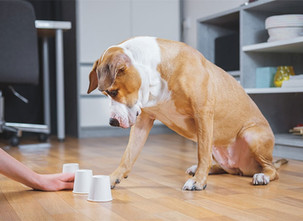 Top 5 Indoor Dog Games to Play During COVID-19