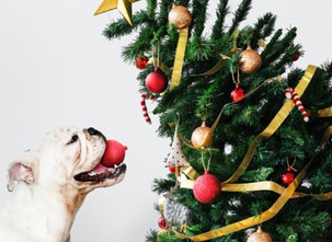 Household Holiday Decor Hazardous to Pets