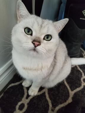 Cat Sitting Peterborough