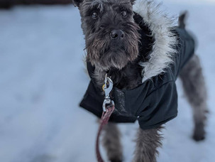 How Cold is Too Cold to Walk My Dog?