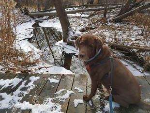 Dog Walk Adventure