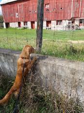 Dog Walking Peterborough