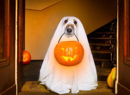 Halloween Treats for Doggie? No Way Jose!!
