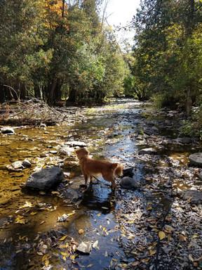Jackson Park Dog Walking