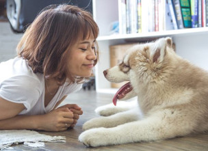 What is Pet Sitting, and What Does a Pet Sitter Do?