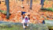Adventure Tails Boomer.jpg