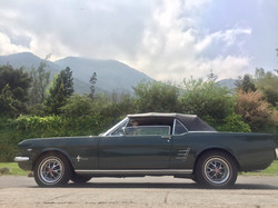 Ford Mustang (83)