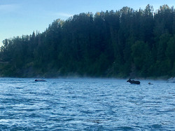 Kasilof River Moose Crossing