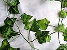 Ivy Garlands.jpg