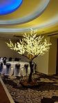 Cherry Blossom Tree in Apex Hotel, Edinburgh