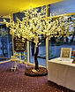 'Wedding Wishes' Cherry Blossom Tree illuminating the reception at Rufflets Hotel in St Andrews